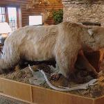Stuffed bear in main lodge.