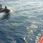 Whale & Dolphin Watching with Club Mirissa