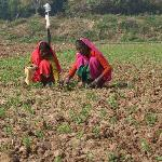 womens working in fields