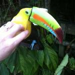 Woody the Toucan