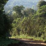 On the dirt road crossing the Jungle to Yacuitnga Lodge