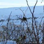 Snowy Ingleborough
