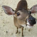 One of our Deer at the beach
