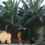 La-Palmeria Palmen