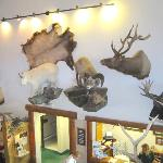 Comfort Inn, Gardiner, MT