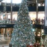 BIG tree at the Mall.
