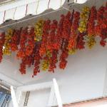 Hanging Tomatoes!