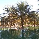 This is an oasis!