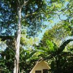 Chalet below a jatobá tree