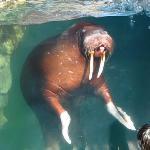 I am the Walrus!