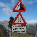Marmot Crossing!