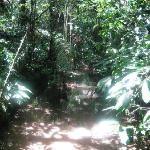 Hiking in Yasuni National Park