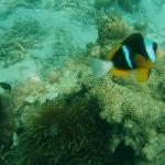 Nemo à Prison Island !
