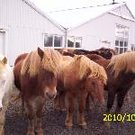 Some horses at the farm