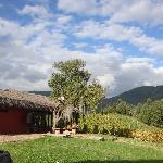 """Viñedo, Punta Larga"" , exquisito vino local."