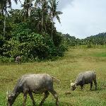 Langkawi Paddy Field