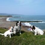 Dogs welcome at Lligwy Beach