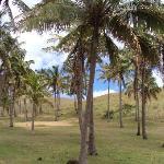 palmeras introducidas desde tahiti