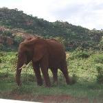 savana - safari