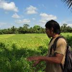 bali herbal walk
