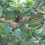 Sloth in the Tree Out Front