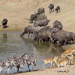 Last Waterhole Hide at Mwamba