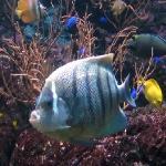 Blick in das Aquarium