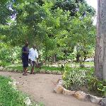 A walk in the garden surrounded by serene environment