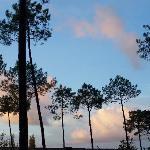 coucher de soleil sur les pins