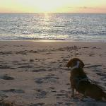 Our dog, enjoying sunset at the private beach