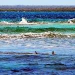 snorkel tour-2 sharks!