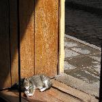Hotel kitten