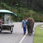rencontre d'un éléphant