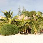 Am Strand spenden Palmen schatten