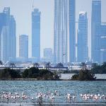 November flamingos