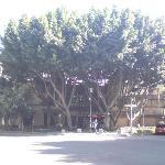 Nice tree nearby hotel principado