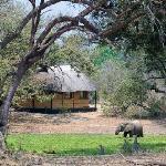 Elephants at the waterhole at  Bilimungwe Bushcamp, South Luangwa, Zambia