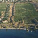 St Hubertus & Oak Bay Vineyard from Air