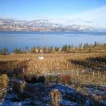 vineyard winter day