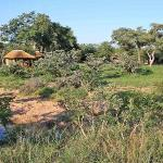 Shindzela Tented Safari Camp, Timbavati Reserve