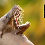 Sea Lions Outside Your Tent