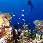 incredible reefs await you, just minutes away from the Barefoot Divers shop