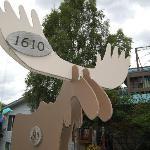 Walkabout Moose