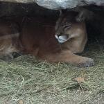 صورة فوتوغرافية لـ Sedgwick County Zoo
