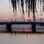 柳がある通りからの松江大橋