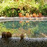 kitties drinking at the pool