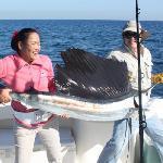 Jirapon's sailfish