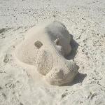 sand hippo
