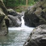 Bosque del Rio Tigre Foto