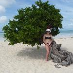 Merry Christmas from Eagle Beach by Divi Divi Tree.